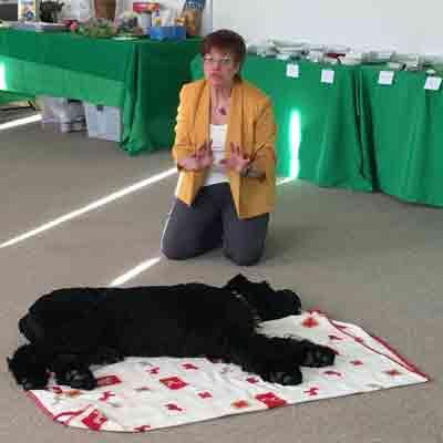 Lourdes Gray demonstrates Reiki on dog